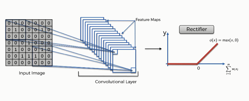 The ReLU layer of a convolutional neural network